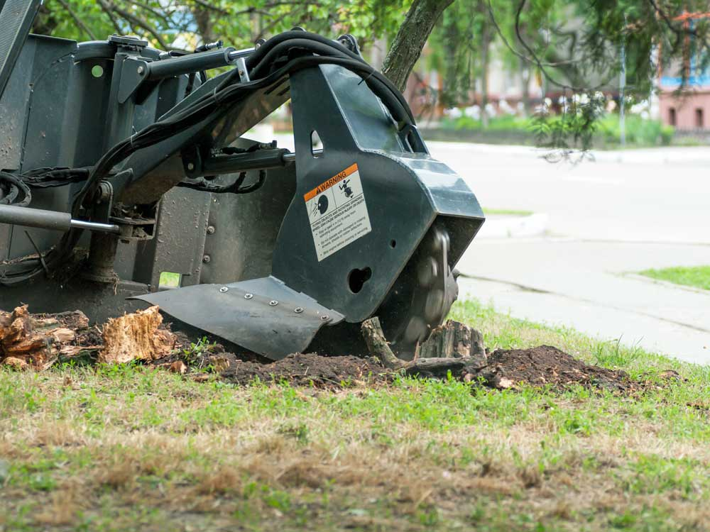 Tallahassee-Stump-Grinding
